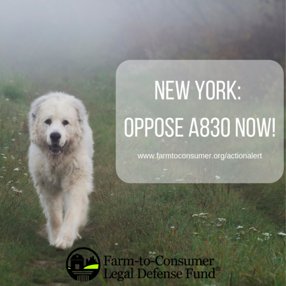 Livestock Guardian Dog photo - Oppose A830 in NY